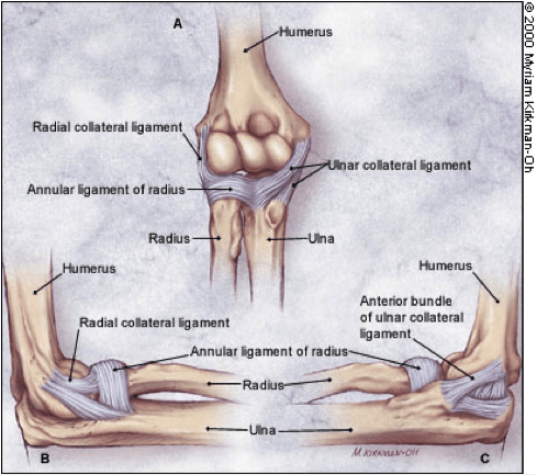 Elbow_Ligaments